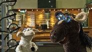 Wolle und Pferd beim Optiker © NDR / Uwe Ernst