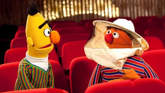 Bert und Ernie bei der Orchesterprobe der NDR Radiophilharmonie, Ernie trägt Imkerhut © Cordula Kropke Foto: Cordula Kropke