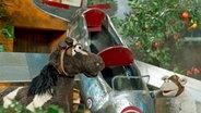 Pferd und Wolle mit selbstgebauten Flugezug. © NDR/Thorsten Jander Fotograf: Thorsten Jander