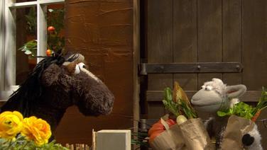 Wolle und Pferd können ihren Haustürschlüssel nicht finden © NDR/Sesame Workshop Foto: Screenshot