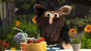 Pferd schaut auf den Tisch und eine Biene. © NDR Foto: Thorsten Jander