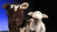 Pferd und Wolle © NDR