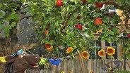 Pferd im Garten unter einem Apfelbaum. © NDR Fotograf: screenshot