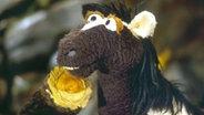 Pferd © NDR/Studio Hamburg